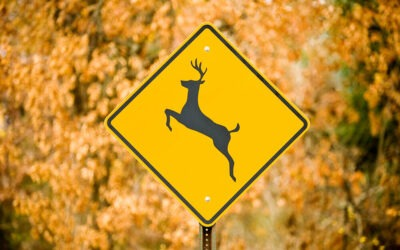 Top 7 Ways to Help you Avoid Hitting a Deer